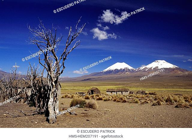 Bolivia, Oruro department, Sajama province, Sajama National Park, enclosure for llamas and houses at the foot of Pomerape and Parinacota volcanoes
