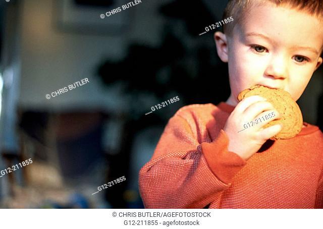 Boy (2 yrs.) eating cookie