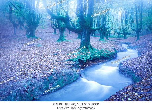 Otzarreta beechwood and river. Gorbeia Natural Park. Biscay, Basque Country, Spain. Europe