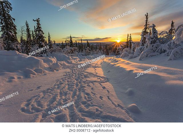 Winter landscape in direct light at sundown with a road with tracks, snowy birch and spruce trees and nice color in the sky, Gällivare, Swedish Lapland, Sweden