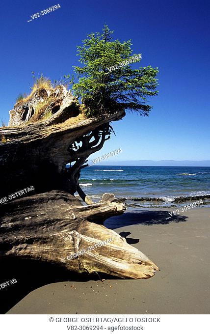 Log on Strait of Juan de Fuca shoreline, Shipwreck Point Natural Area Preserve, Clallam County, Washington