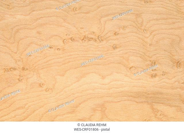 Wood surface, Birdseye maple wood Acer saccharum full frame