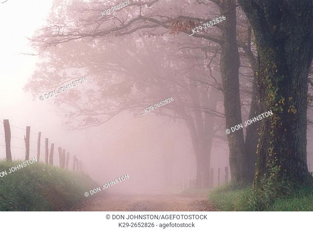 Sparks Lane in morning fog at Cades Cove, Great Smoky Mountains National Park, Tennessee, USA