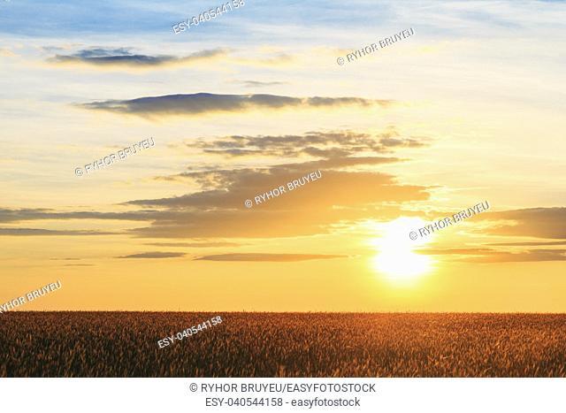 Gomel, Belarus. Landscape Of Wheat Field Under Scenic Summer Dramatic Sky In Sunset Dawn Sunrise. Skyline