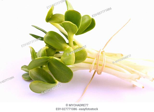 bunch of green sprouts isolated on white background - macro
