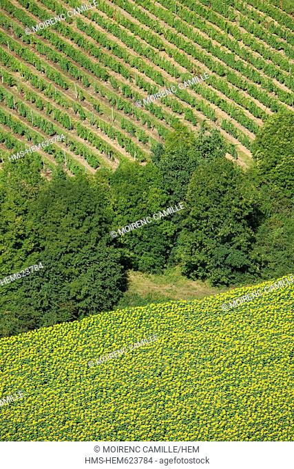 France, Rhone, Beaujolais, Azergues valley towards Chatillon, vines and sunflowers aerial view