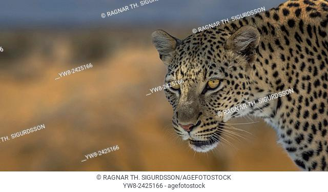 Portrait of Leopard, Etosha National Park,Namibia, Africa