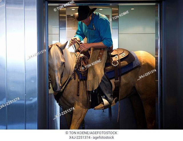 david cowley on horse in elevator