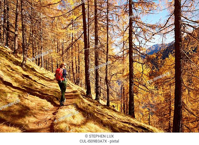 Woman looking at view, Schnalstal, South Tyrol, Italy