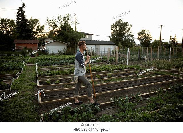 Man tending to vegetable garden