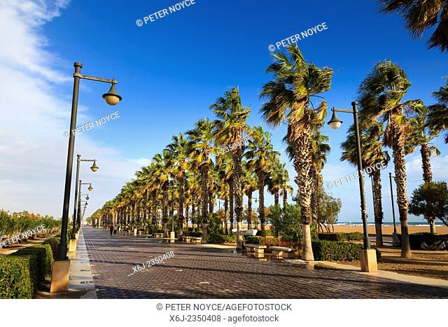 Windswept palm trees along the promenade at Valencia in winter sunshine