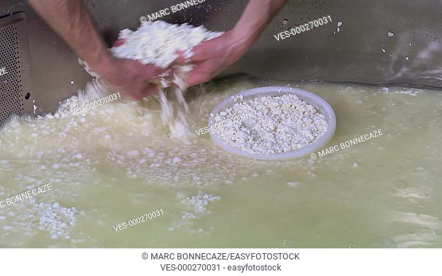 filling cheese molds with small pieces of curd