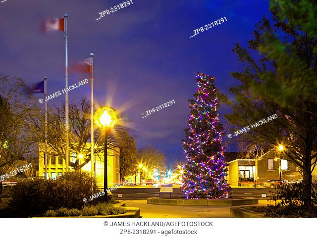 A very large Christmas Tree (Blue Spruce) covered in lights in downtown Oakville, Ontario, Canada