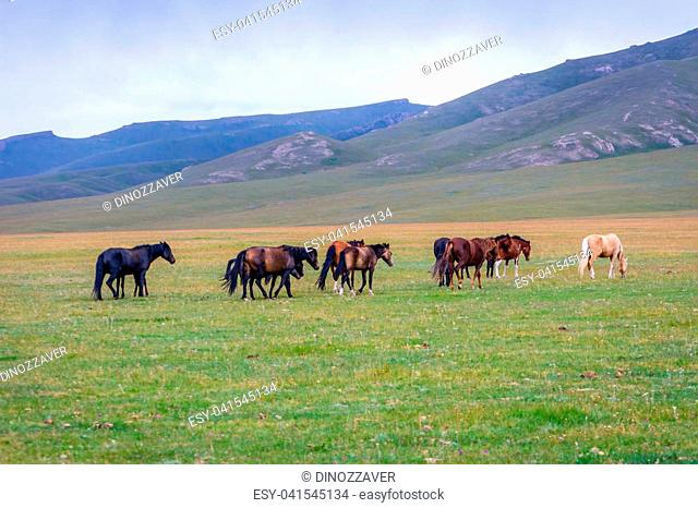Herd of horses in misty green landscape by Song Kul lake, Kyrgyzstan