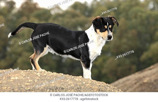 Dog, Extremadura, Spain