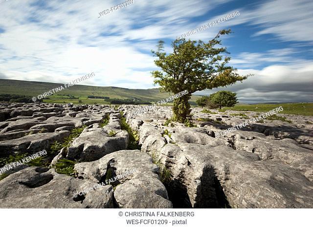 UK, England, Yorkshire Dales National Park, Limestones
