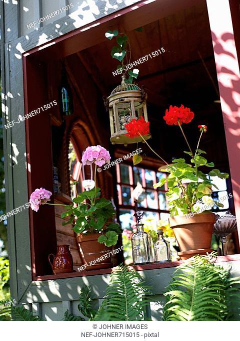 Flowerpots in a window, Sweden