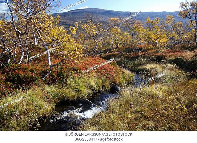 Brook, Storulvån, Jämtland, Sweden