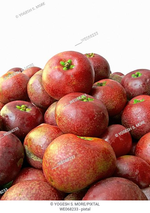 Kokam Fruits. Garcinia Indica. Family: Guttiferae. The Kokam tree. An elegant evergreen tree. The fruits are edible and are made into squashes as well as used...