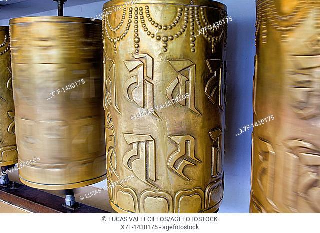 Prayer wheels, in Namgyal Monastery,in Tsuglagkhang complex  McLeod Ganj, Dharamsala, Himachal Pradesh state, India, Asia