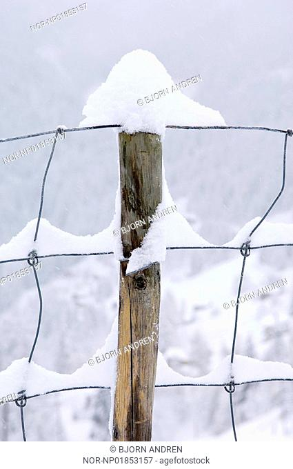 Close-up of snow on a fence