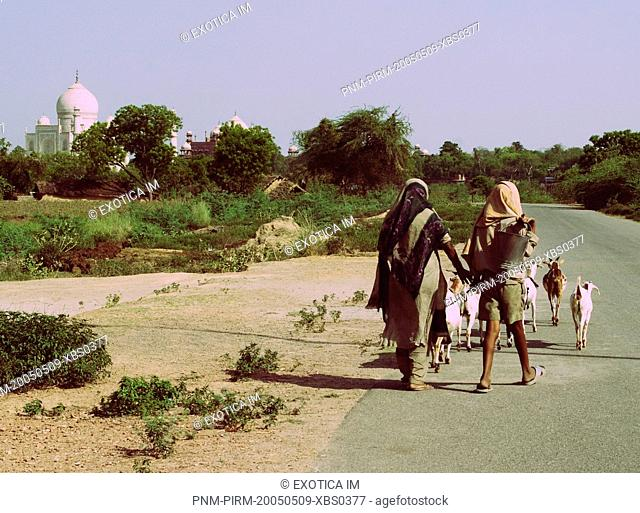 Farmers with goats on a road with the mausoleum in the background, Taj Mahal, Agra, Uttar Pradesh, India