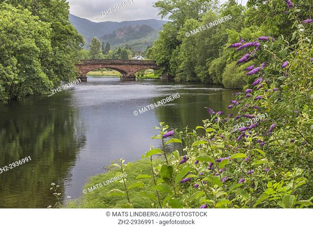 Callander bridge over the river Teith with Buddleia flower in foreground, Callander, Scotland