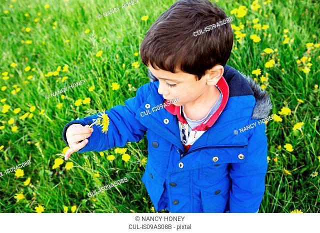Portrait of boy in blue coat holding dandelion