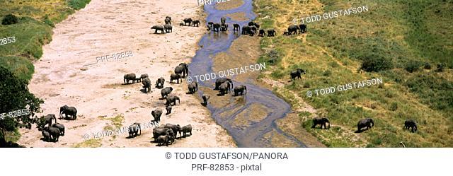 Elephants Tarangire River Tarangire Tanzania Africa