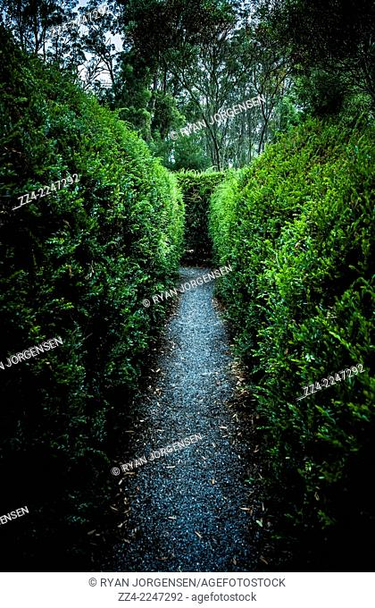Vertical nature photograph of a garden labyrinth with thin foliage walkway. Taken Glengarry, Tasmania, Australia