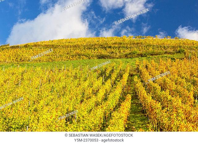 Alsatian Wine Route, Haut Rhin, Niedermorschwihr, Alsace, France, Europe