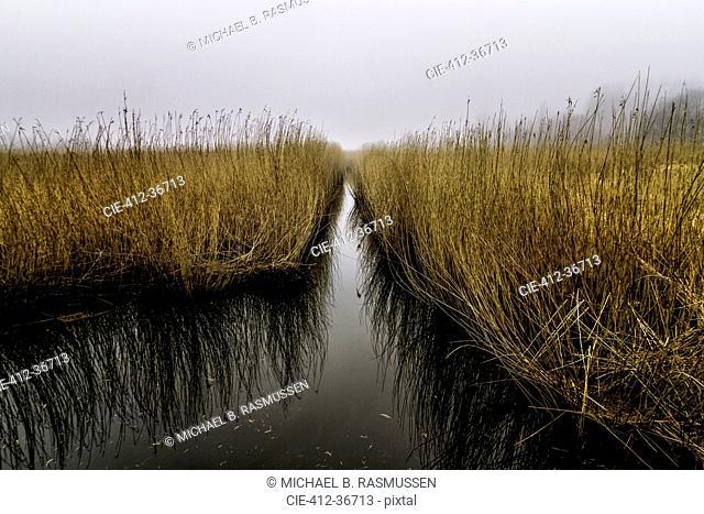 Tranquil grass growing in water, Avnoe, Denmark