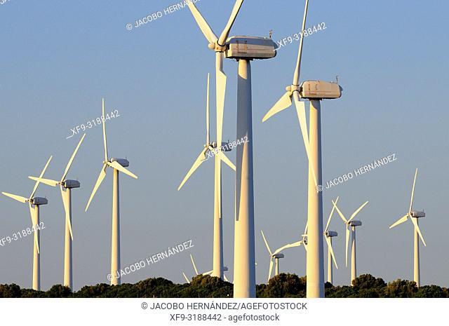 Wind generators. Vejer de la Frontera. Cádiz province. Andalucía. Spain