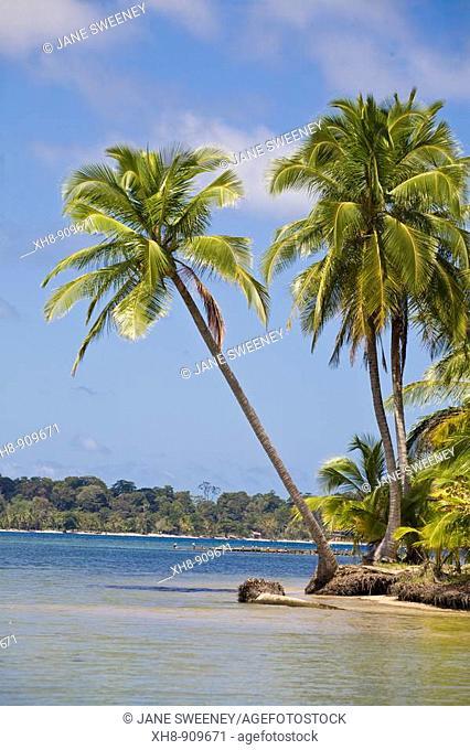 Boca del Drago beach, Colon Island, Bocas del Toro Province, Panama