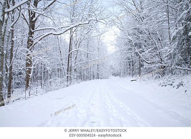 Snowy Landscape