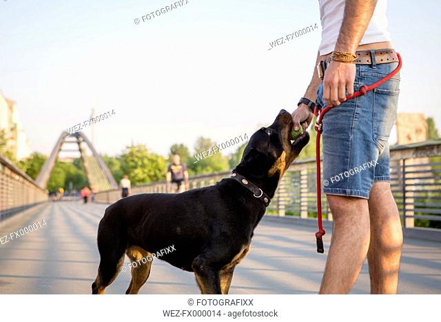 Germany, Berlin, portrait of young man playing with his Rottweiler on pedestrian bridge, partial view
