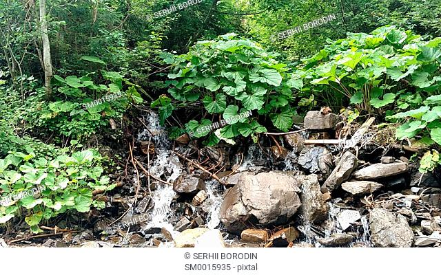 Waterfall water flowing from mountain forest landscape Fast flowing liquid among the rocks rocks and green tree beech nature