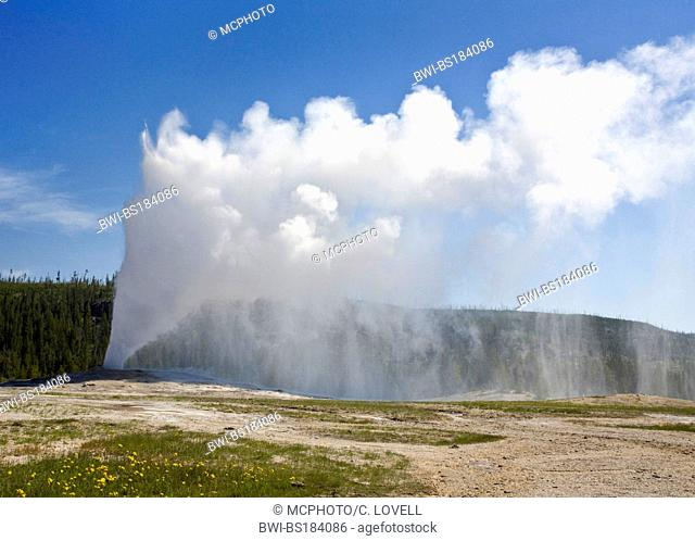 OLD FAITHFUL GEYSER erupts hourly sending as much as 8,400 gallons of boiling water 184 feet into the air, USA, Wyoming, Yellowstone National Park