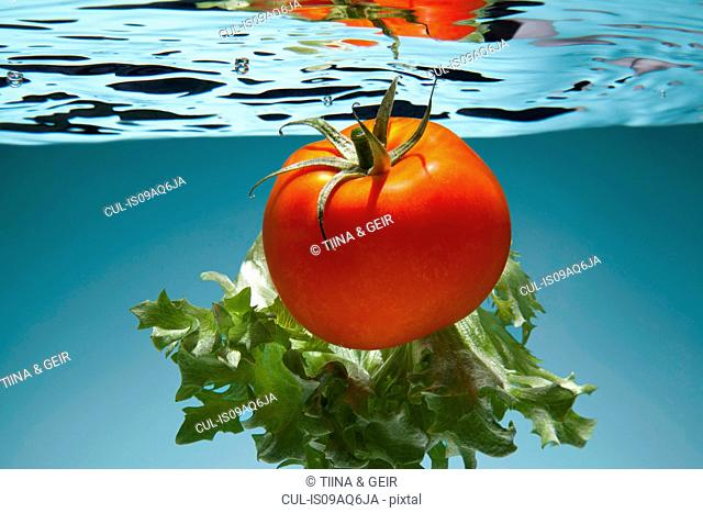 Tomato and lettuce underwater
