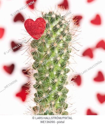 Red heart caught on the sharp thornes of a cactus. Conceptual image of heartbreak and when love hurts