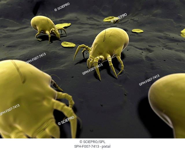 Dust mite, computer artwork