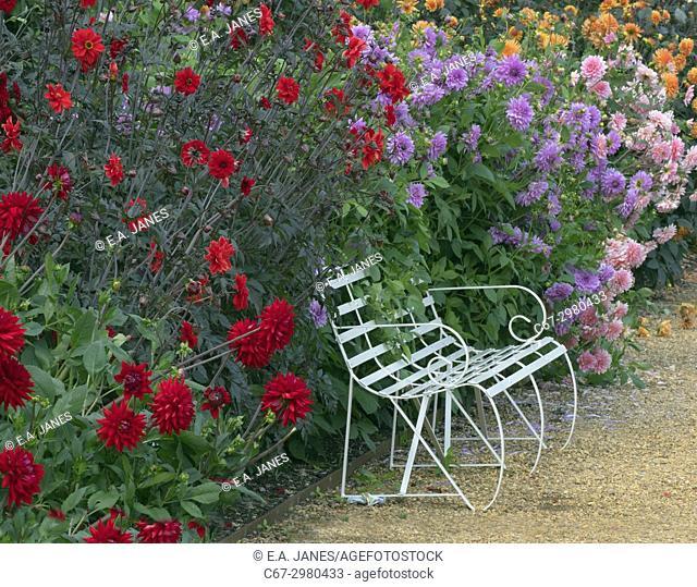 Dahlia border with garden seat