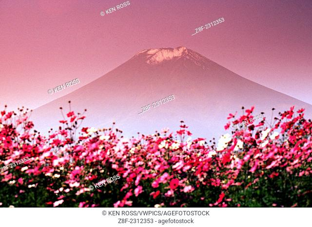 Mount Fuji with Flowers, Japan