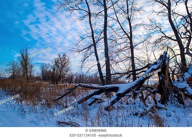 Big snow covered log on winter field. Snow covered trees and frozen lake