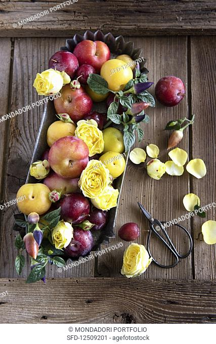 A summer arrangement of various plums with rose petals and chillis