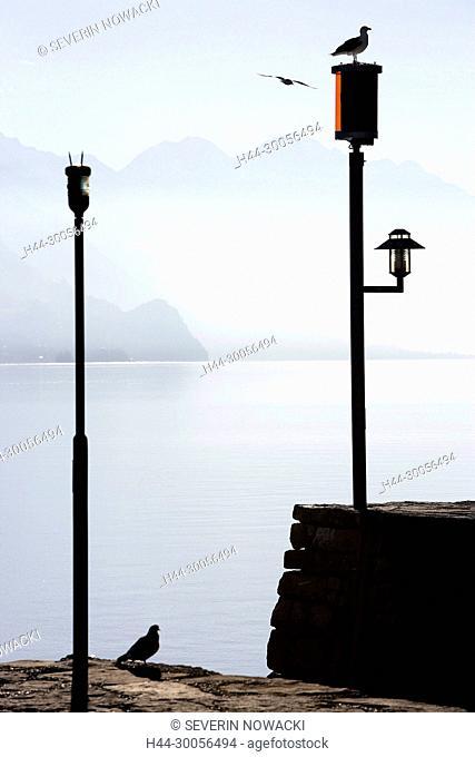 Herbst, Ufer, Brienzersee, Schweiz