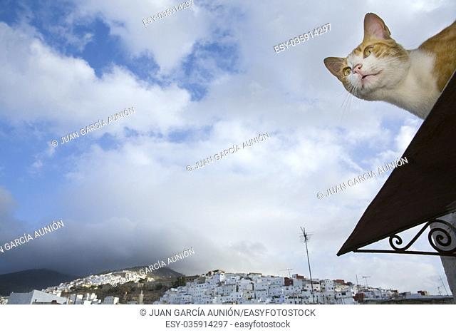Street cat on the roof over the blue sky of Tetuan, Morocco