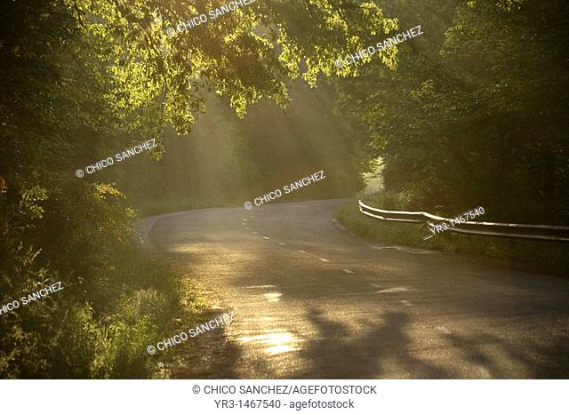 Morning sunlight beams through trees in a road in the French Way, Way of Saint James, Leon province, Spain. Hundred of thousands pilgrims walk every year to...