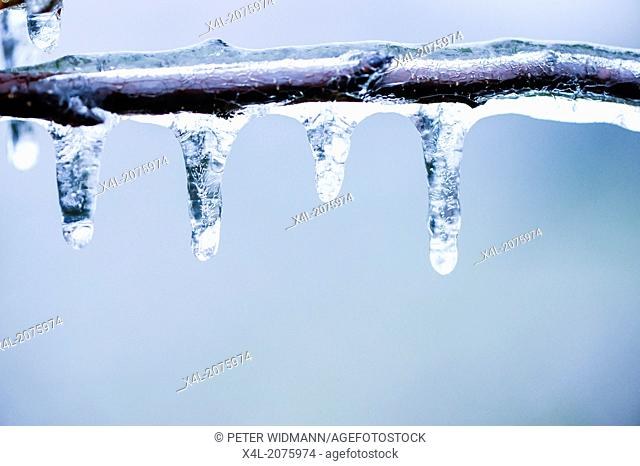 freezing rain, ice cover, Austria, Lower Austria, Southern Lower Austria, Eggendorf