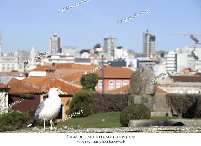 Seagull and Aerial view of the old town in Oporto from the cathedral outlook, Portugal